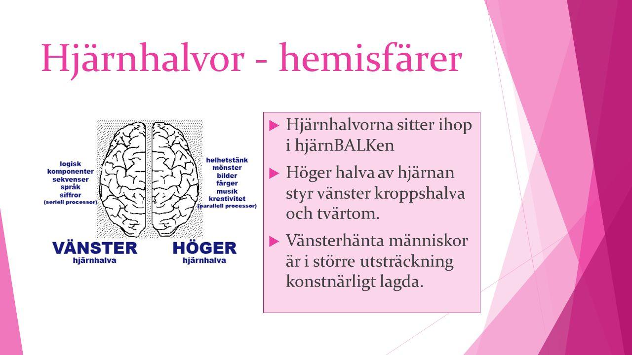 Hjärnhalvor - hemisfärer