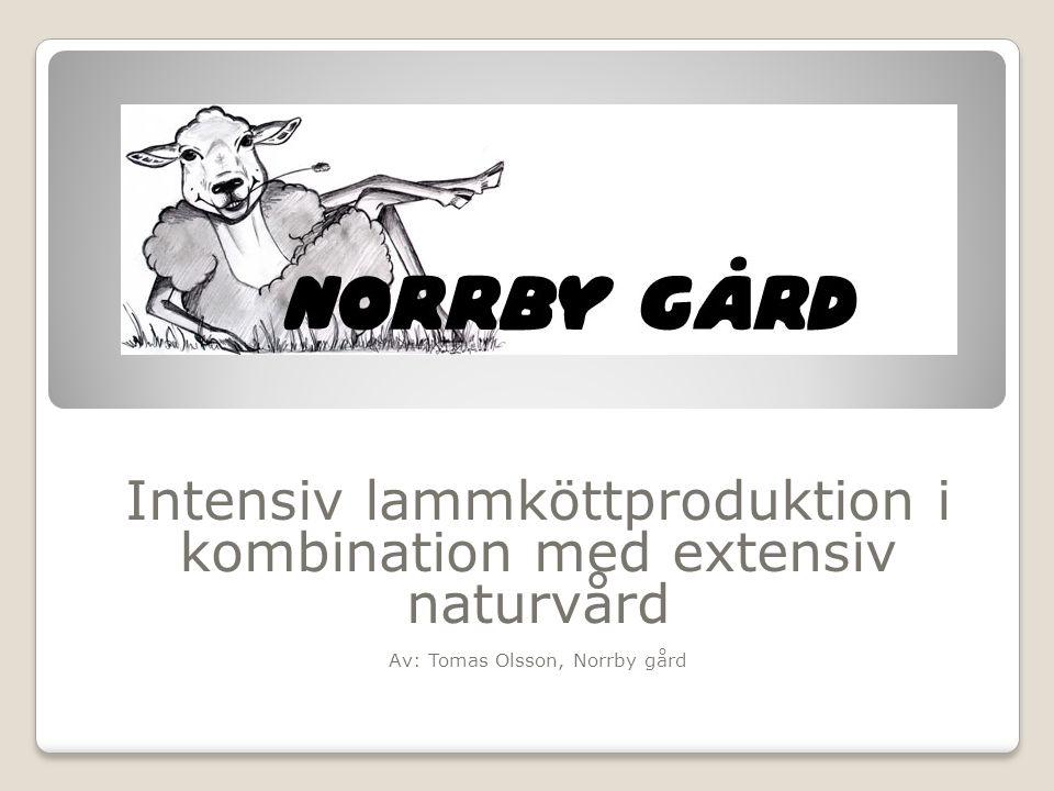 Intensiv lammköttproduktion i kombination med extensiv naturvård