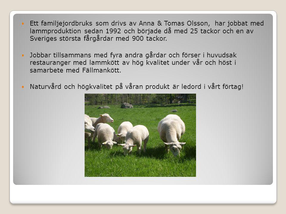 Ett familjejordbruks som drivs av Anna & Tomas Olsson, har jobbat med lammproduktion sedan 1992 och började då med 25 tackor och en av Sveriges största fårgårdar med 900 tackor.