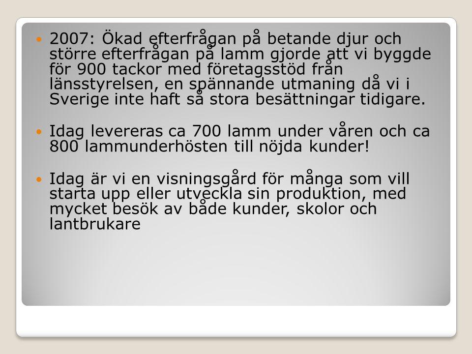 2007: Ökad efterfrågan på betande djur och större efterfrågan på lamm gjorde att vi byggde för 900 tackor med företagsstöd från länsstyrelsen, en spännande utmaning då vi i Sverige inte haft så stora besättningar tidigare.