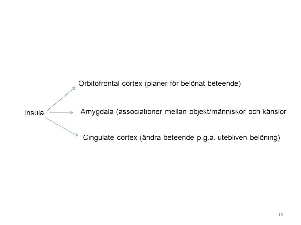 Insula Orbitofrontal cortex (planer för belönat beteende) Amygdala (associationer mellan objekt/människor och känslor.