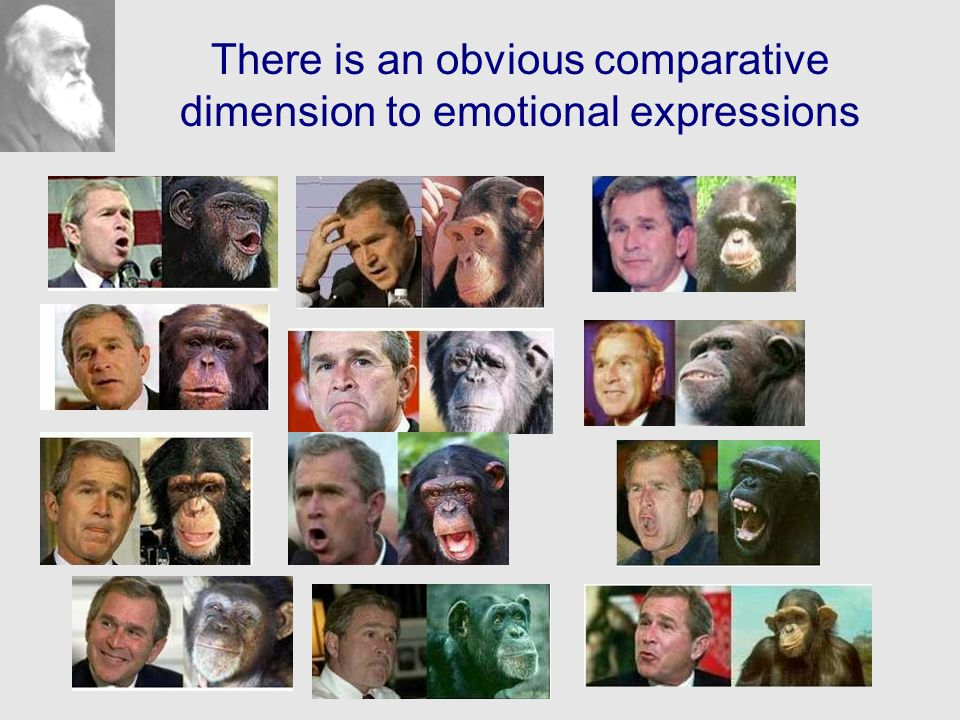 There is an obvious comparative dimension to emotional expressions