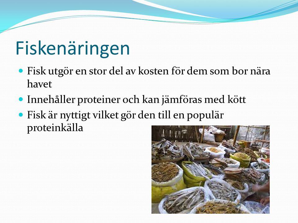 Fiskenäringen Fisk utgör en stor del av kosten för dem som bor nära havet. Innehåller proteiner och kan jämföras med kött.