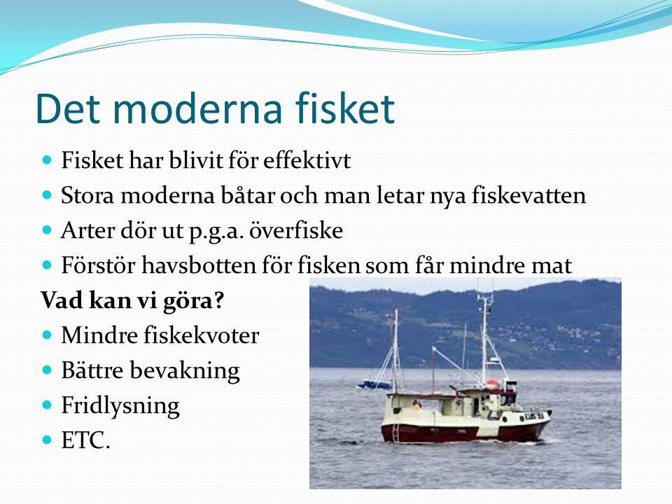 Det moderna fisket Fisket har blivit för effektivt