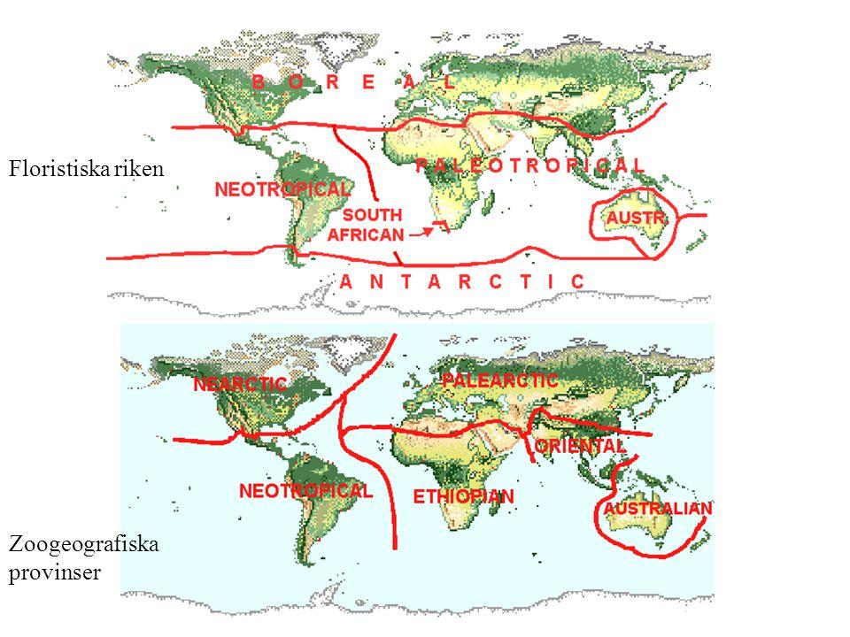 Floristiska riken Zoogeografiska provinser