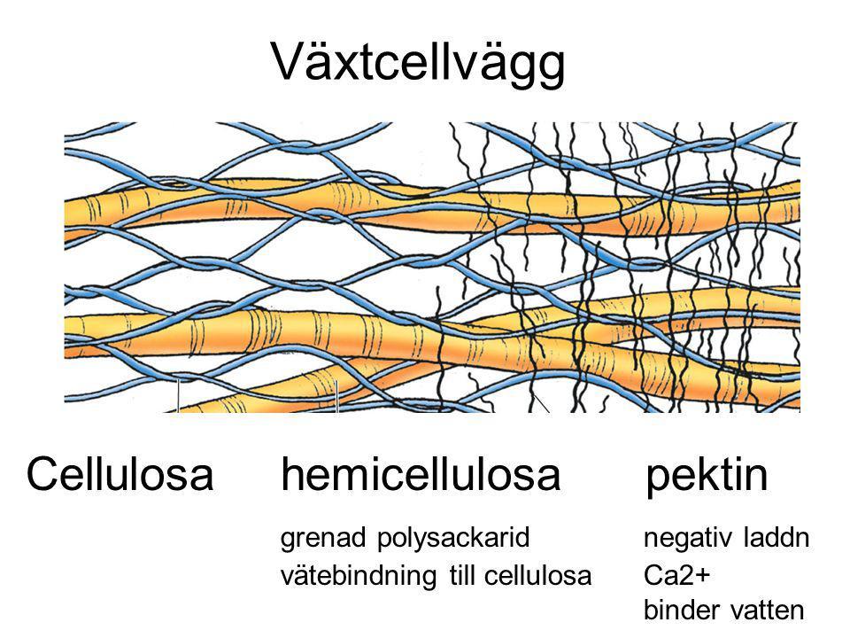 Växtcellvägg Cellulosa hemicellulosa pektin