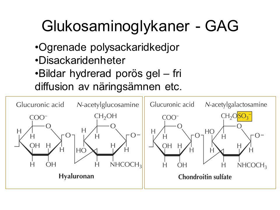 Glukosaminoglykaner - GAG