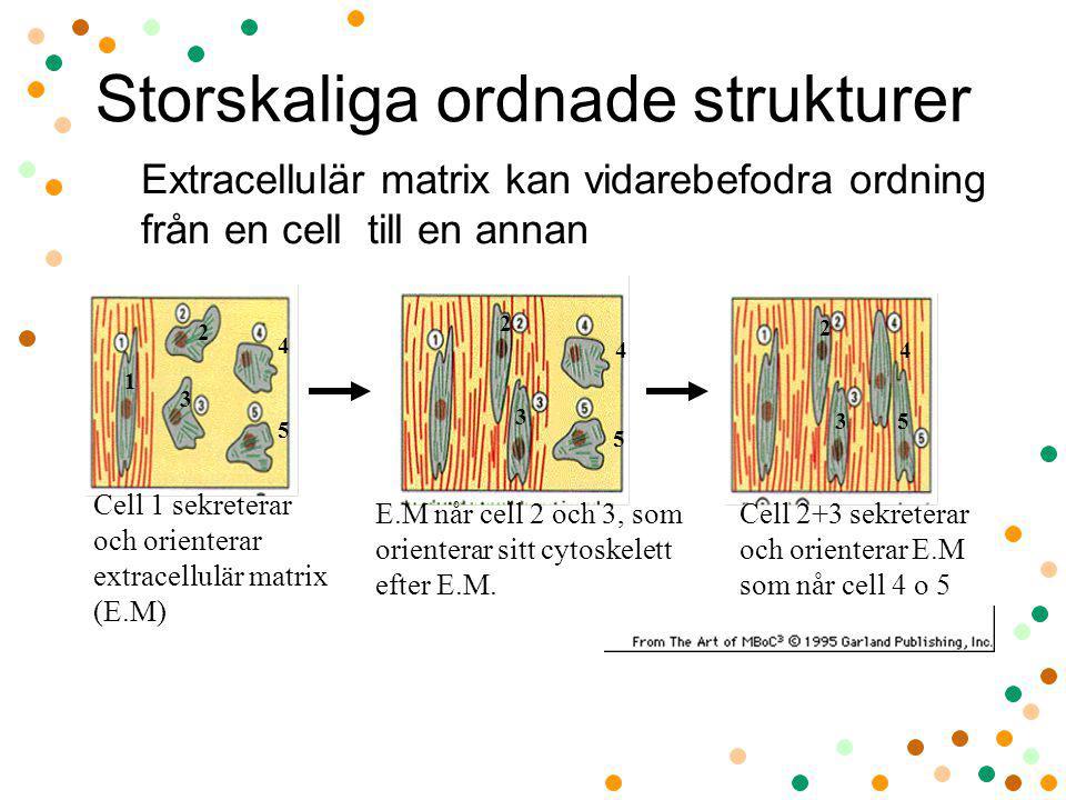 Storskaliga ordnade strukturer