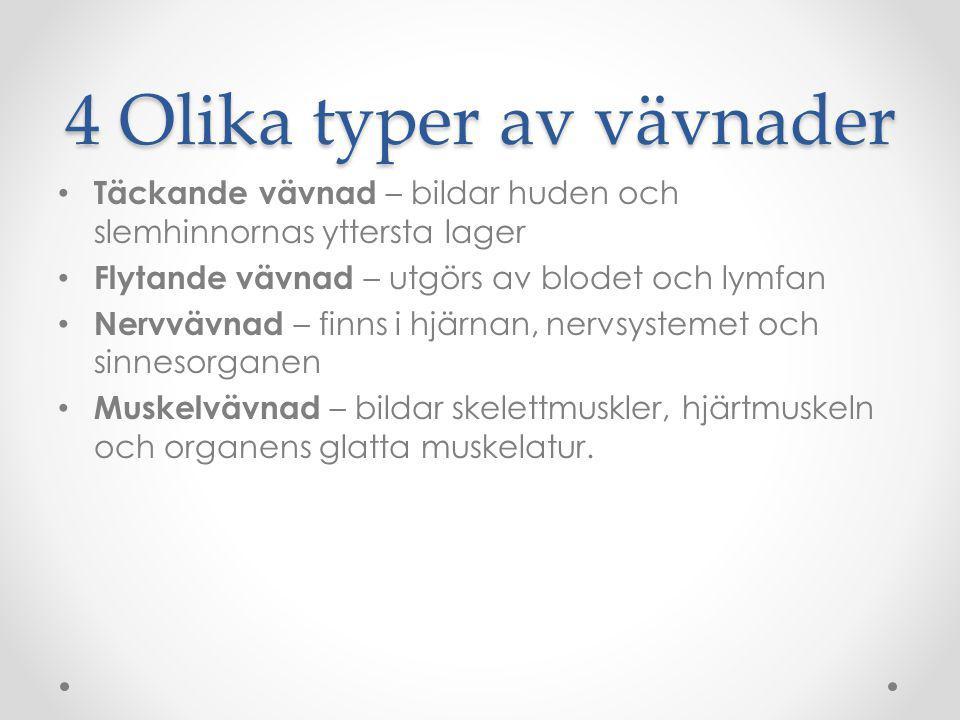 4 Olika typer av vävnader