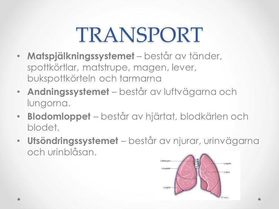 TRANSPORT Matspjälkningssystemet – består av tänder, spottkörtlar, matstrupe, magen, lever, bukspottkörteln och tarmarna.
