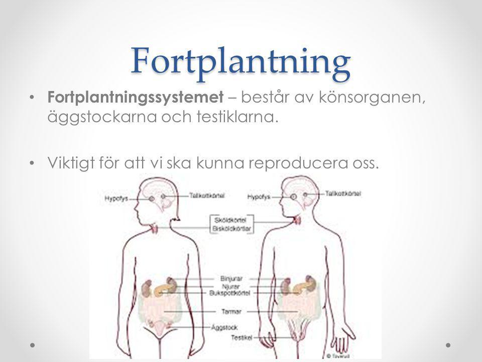Fortplantning Fortplantningssystemet – består av könsorganen, äggstockarna och testiklarna.