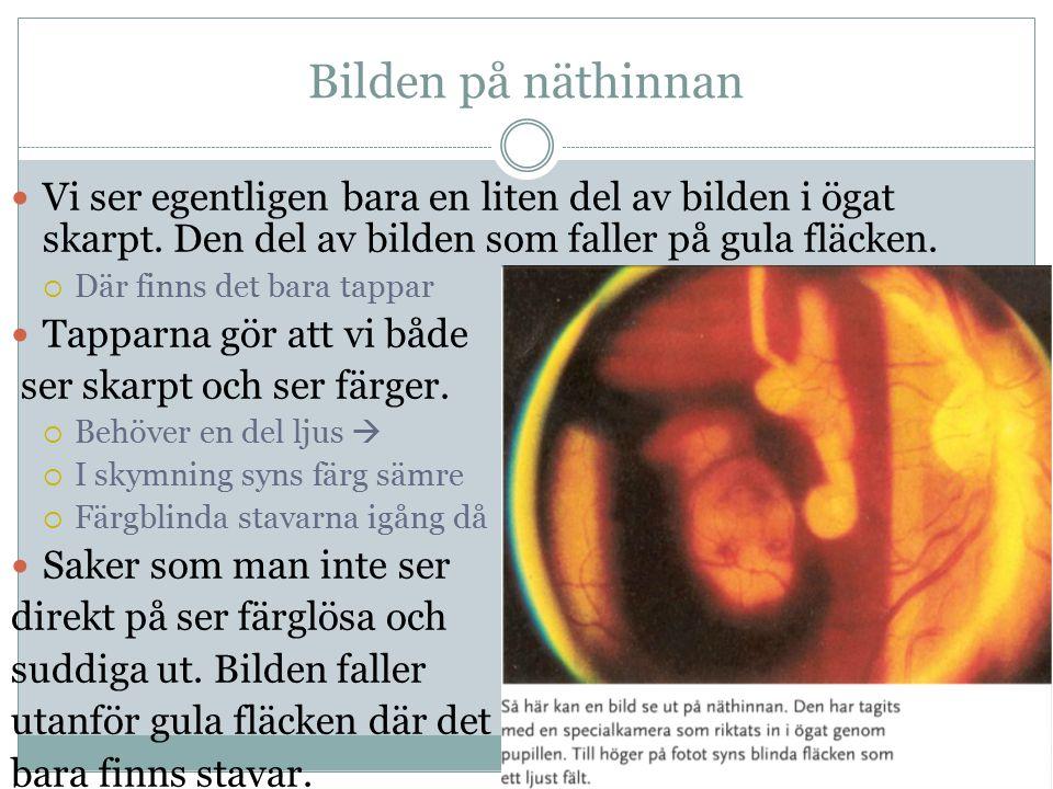 Bilden på näthinnan Vi ser egentligen bara en liten del av bilden i ögat skarpt. Den del av bilden som faller på gula fläcken.