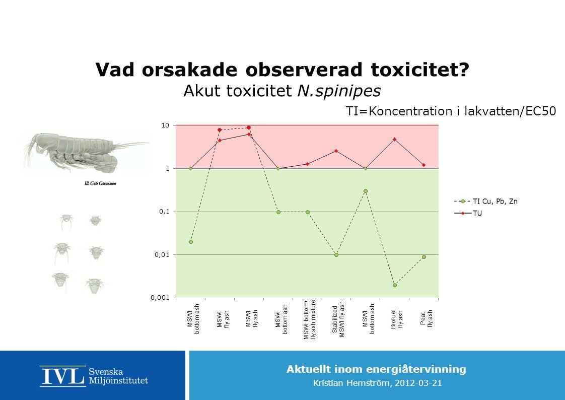 Vad orsakade observerad toxicitet Akut toxicitet N.spinipes