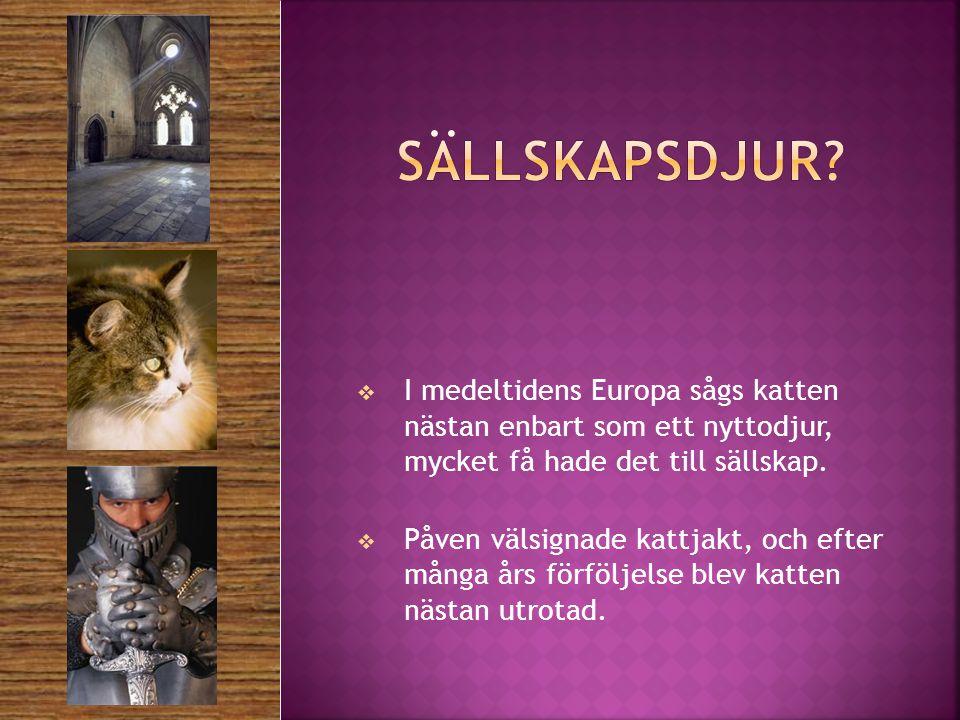 Sällskapsdjur I medeltidens Europa sågs katten nästan enbart som ett nyttodjur, mycket få hade det till sällskap.
