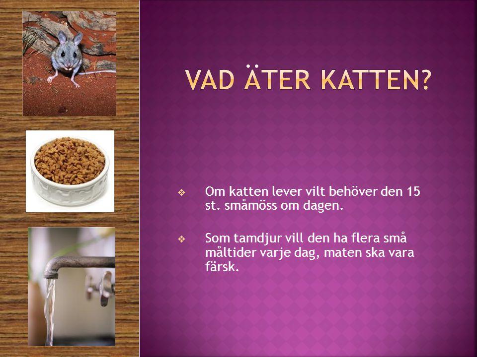 Vad äter katten Om katten lever vilt behöver den 15 st. småmöss om dagen.
