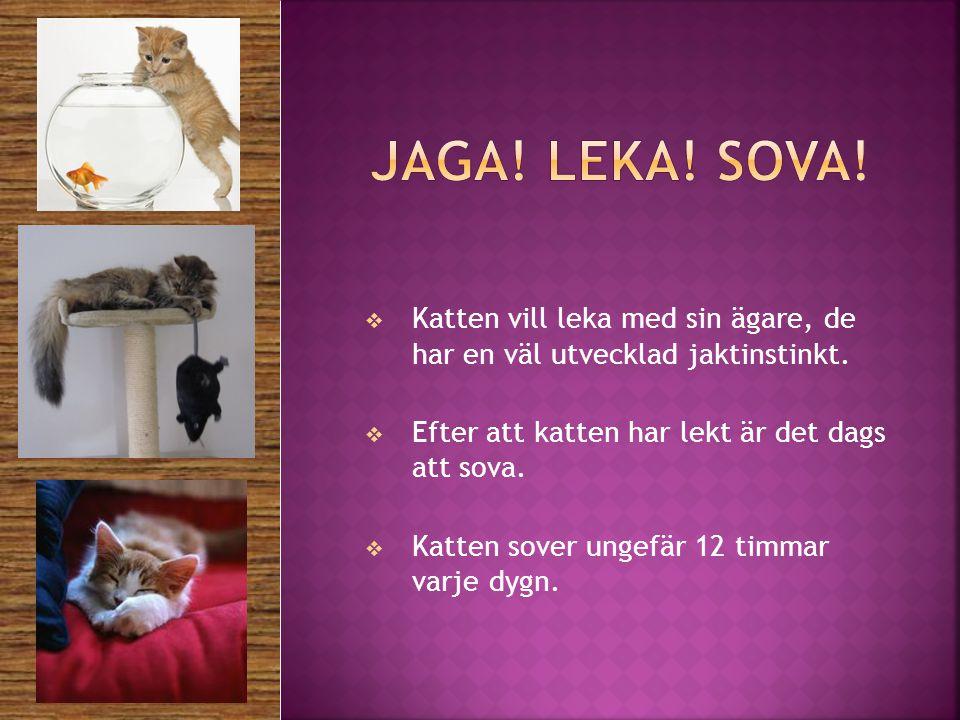 Jaga! Leka! sova! Katten vill leka med sin ägare, de har en väl utvecklad jaktinstinkt. Efter att katten har lekt är det dags att sova.