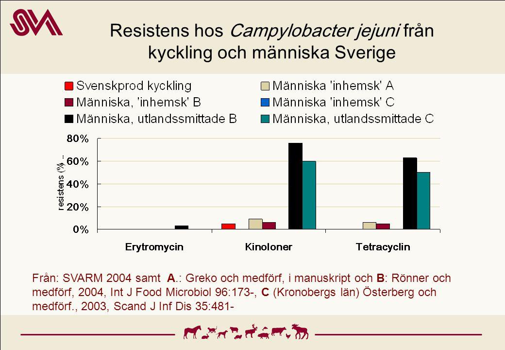 Resistens hos Campylobacter jejuni från kyckling och människa Sverige