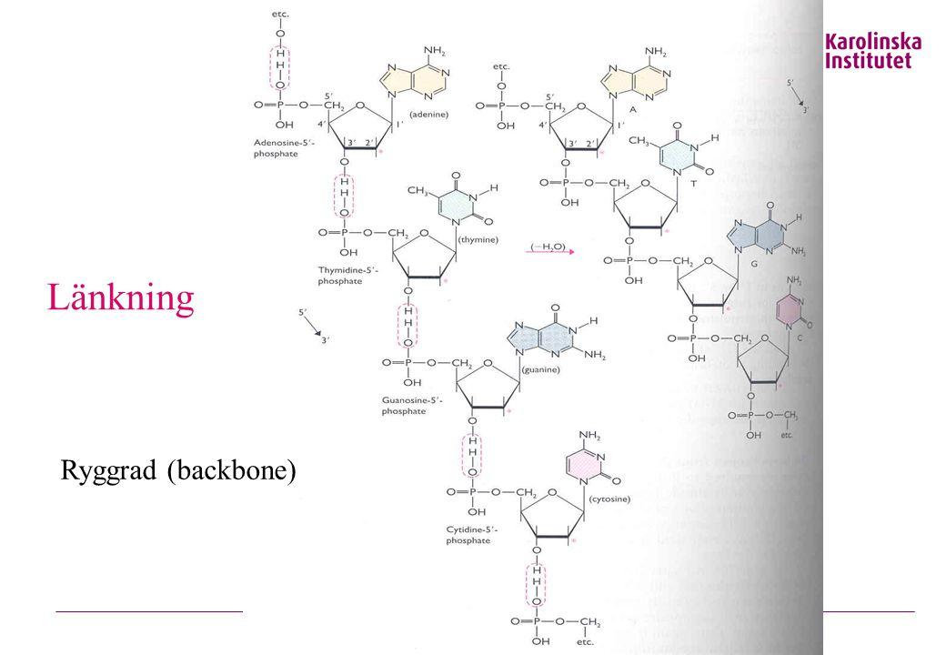 Länkning Ryggrad (backbone)