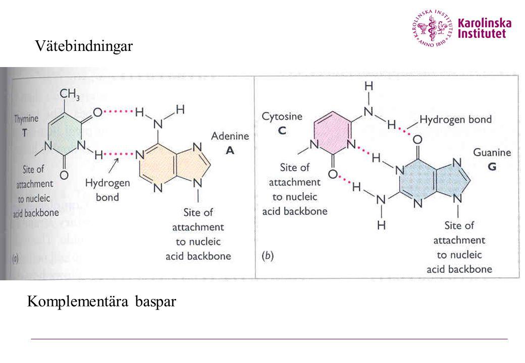 Vätebindningar Komplementära baspar