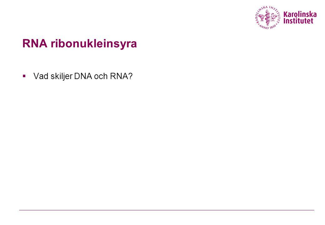RNA ribonukleinsyra Vad skiljer DNA och RNA