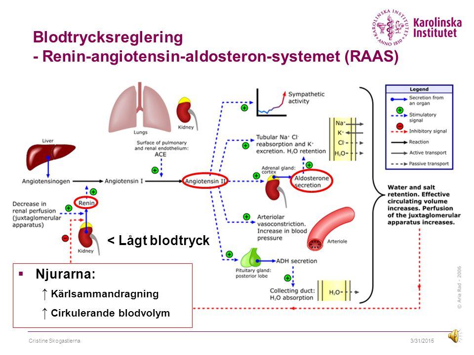 Blodtrycksreglering - Renin-angiotensin-aldosteron-systemet (RAAS)