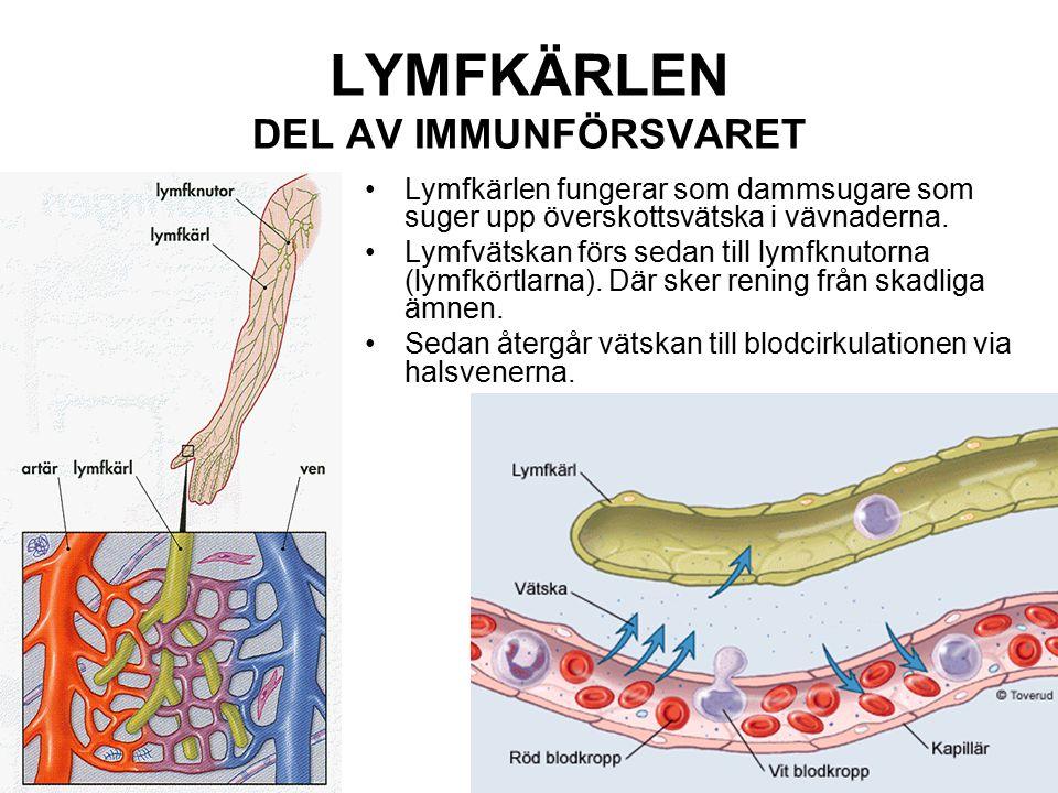 LYMFKÄRLEN DEL AV IMMUNFÖRSVARET