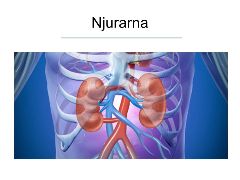 Njurarna