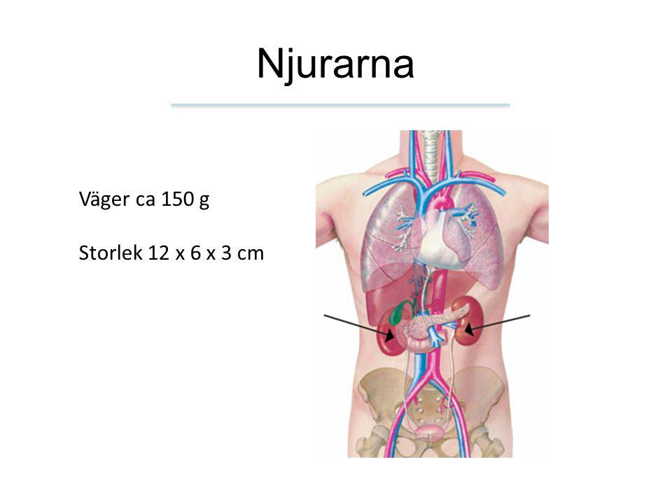 Njurarna Väger ca 150 g Storlek 12 x 6 x 3 cm