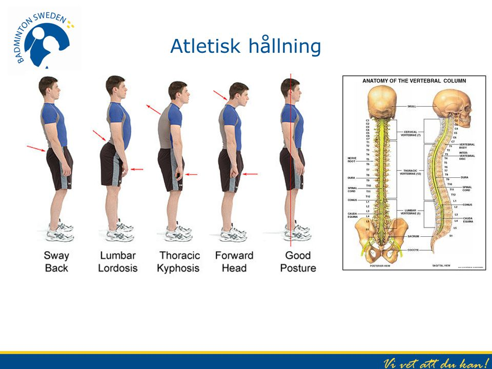 Atletisk hållning Lodlinje – öra, axel, höft, knä och fotknöl.