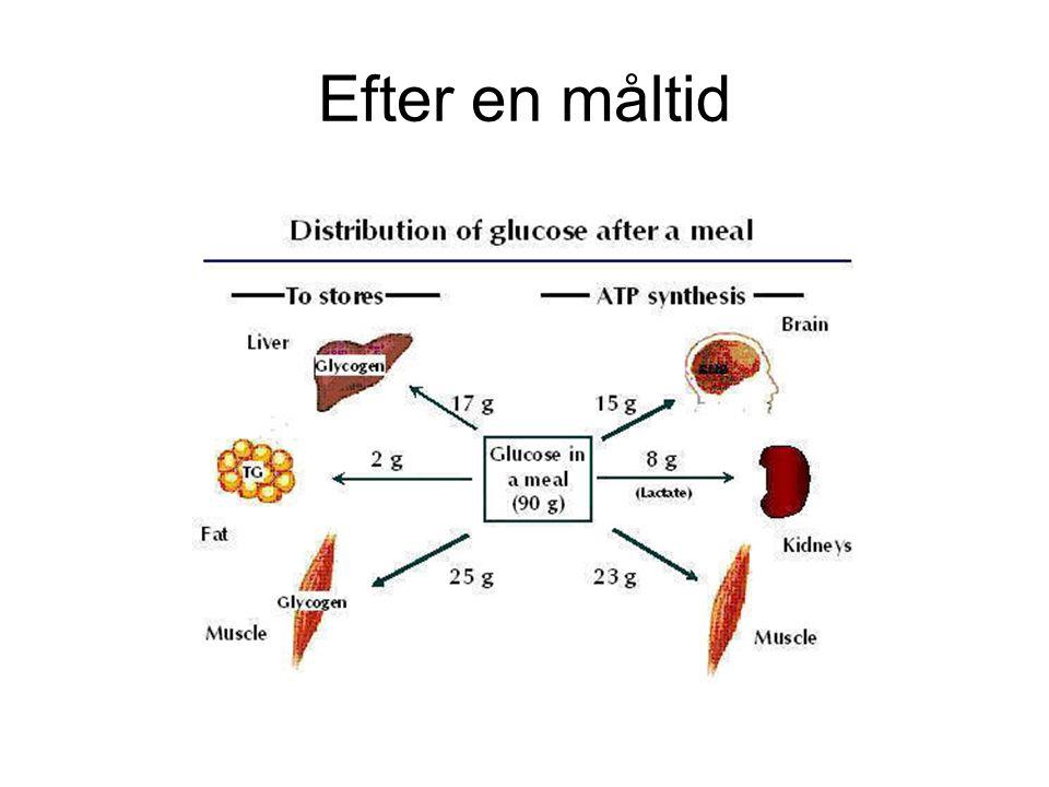 Efter en måltid Glömt erytrocyter, kan bara använda glukos, anaerob nedbrytning till laktat, har inga mitokondrier.