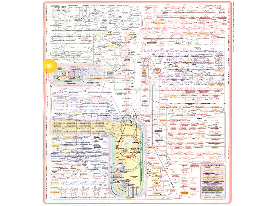 Metabolismen mera i detalj…