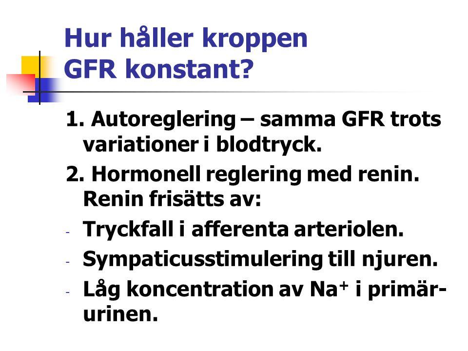 Hur håller kroppen GFR konstant