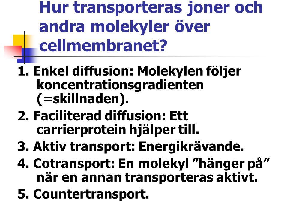 Hur transporteras joner och andra molekyler över cellmembranet