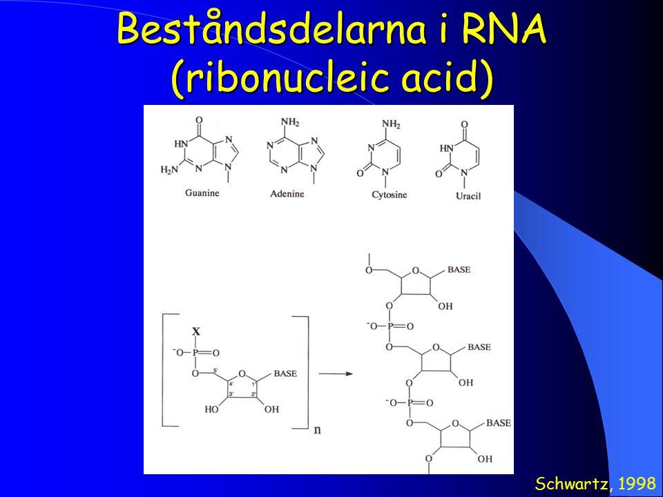 Beståndsdelarna i RNA (ribonucleic acid)