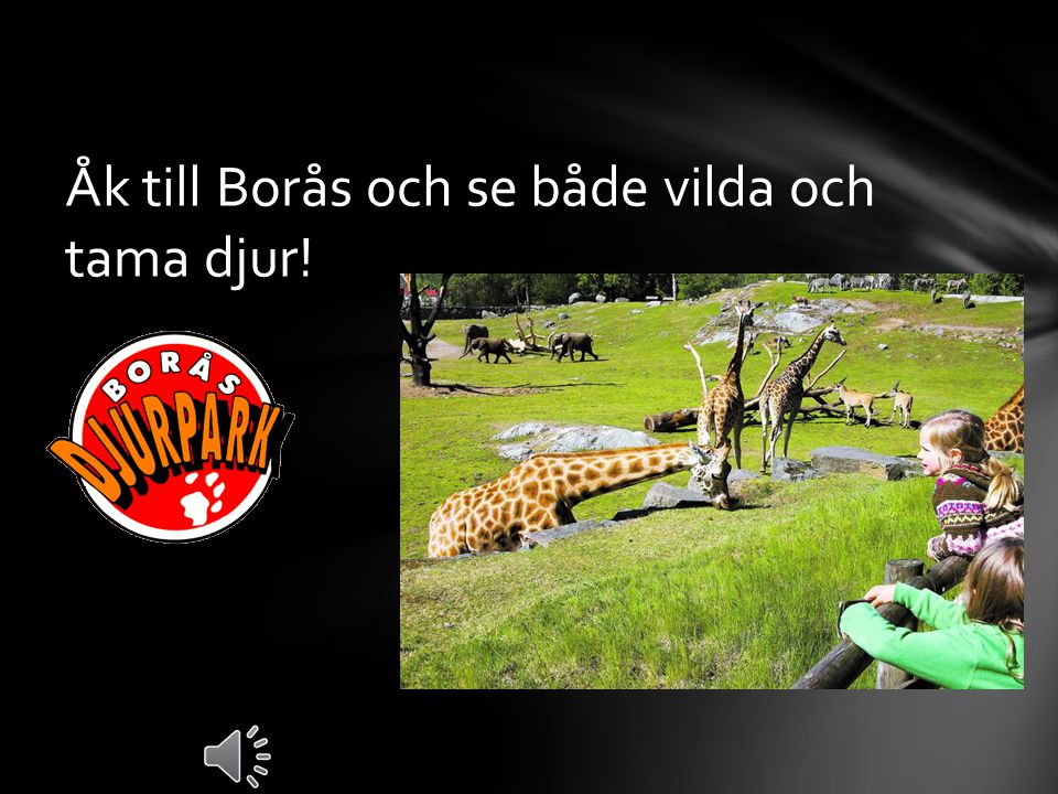 Åk till Borås och se både vilda och tama djur!