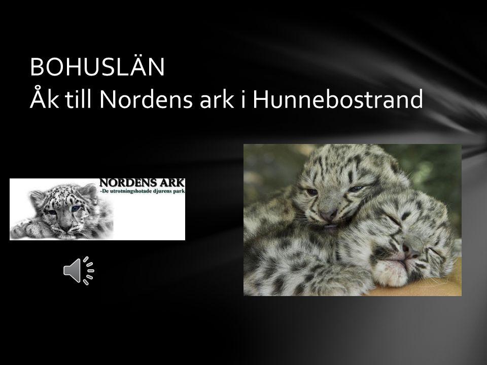 BOHUSLÄN Åk till Nordens ark i Hunnebostrand