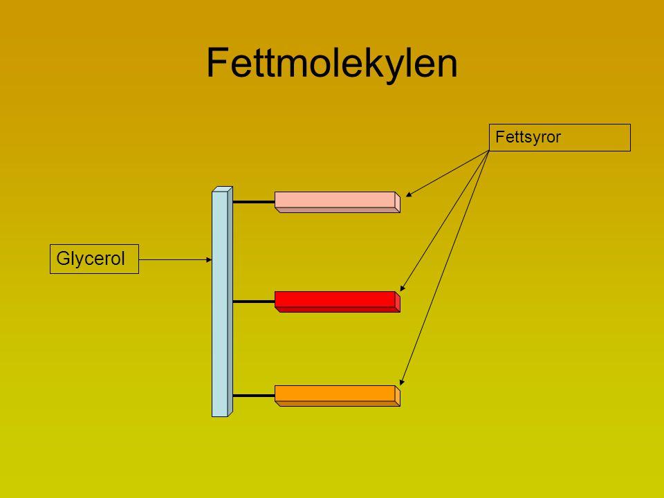 Fettmolekylen Fettsyror Glycerol