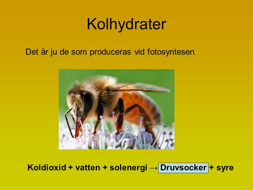 Kolhydrater Det är ju de som produceras vid fotosyntesen