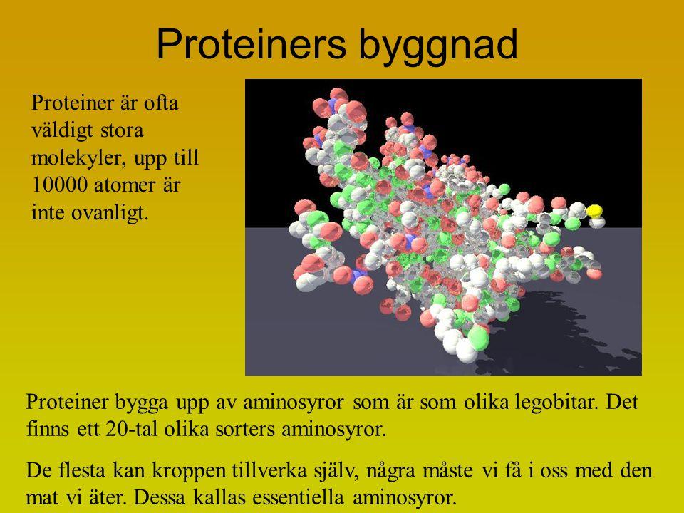 Proteiners byggnad Proteiner är ofta väldigt stora molekyler, upp till 10000 atomer är inte ovanligt.