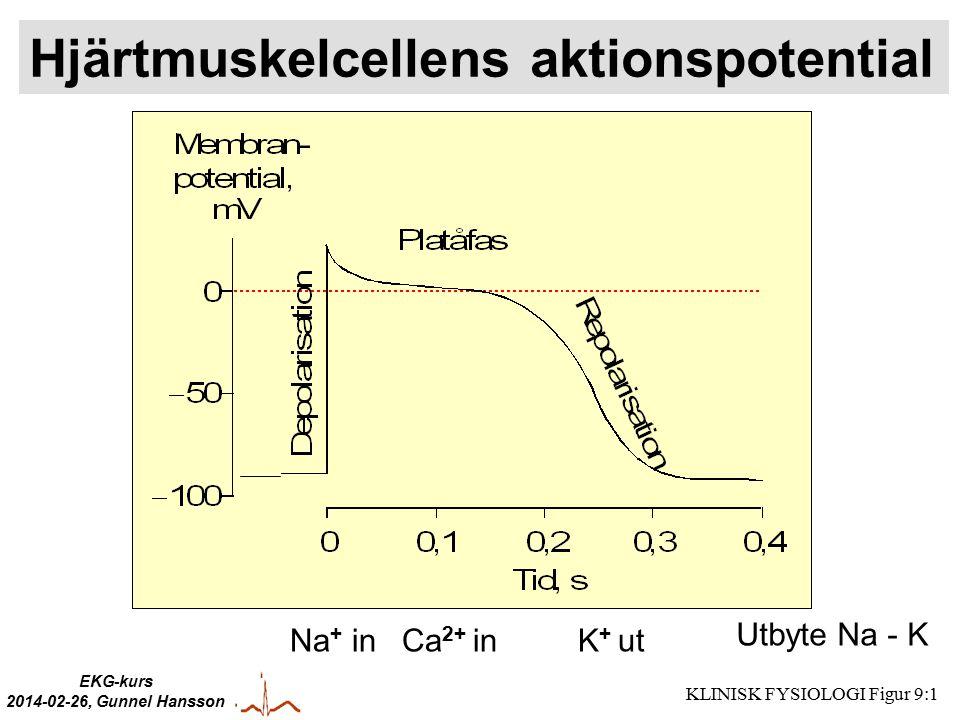 Hjärtmuskelcellens aktionspotential