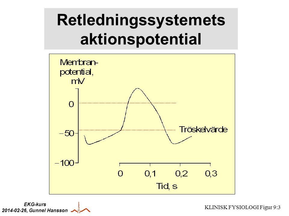 Retledningssystemets aktionspotential