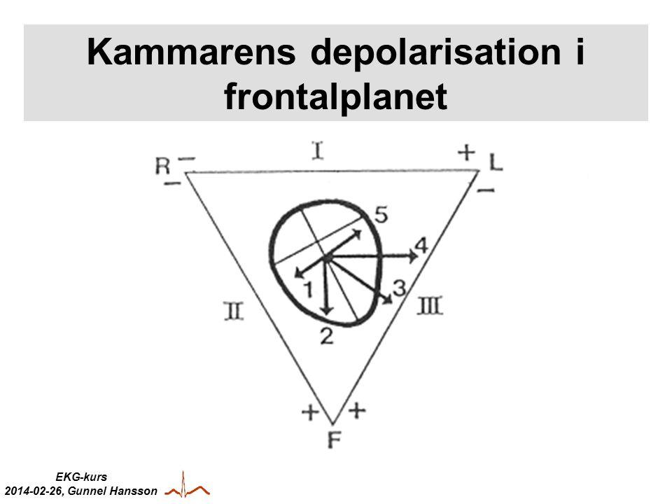 Kammarens depolarisation i frontalplanet
