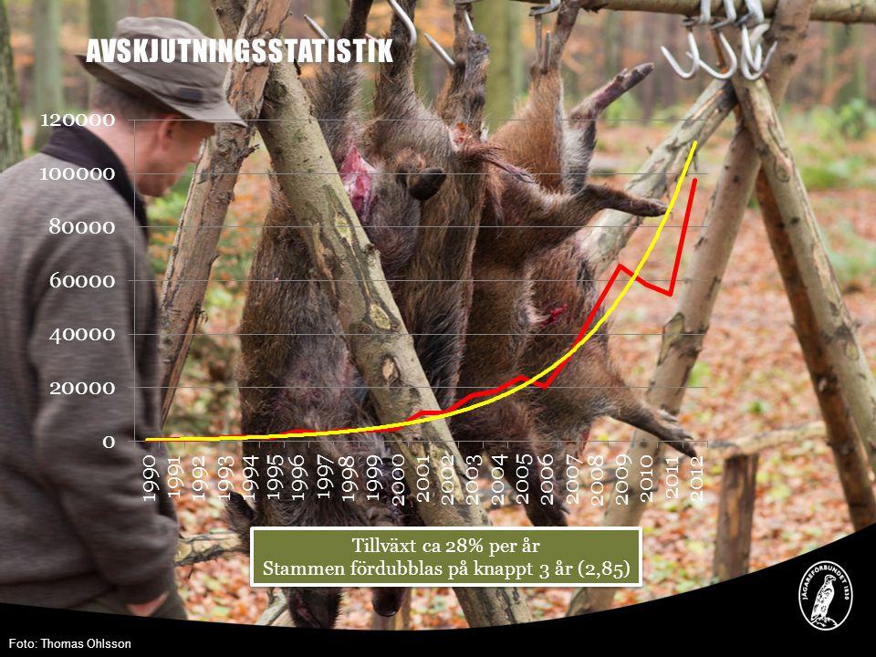 Stammen fördubblas på knappt 3 år (2,85)