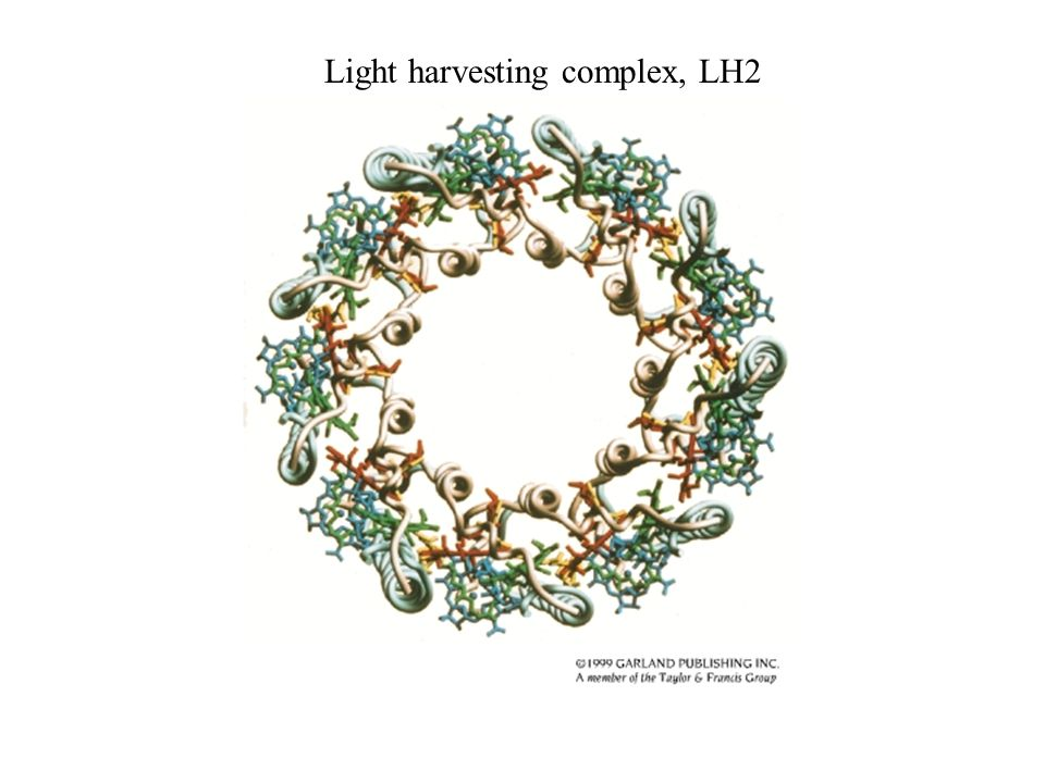 Light harvesting complex, LH2