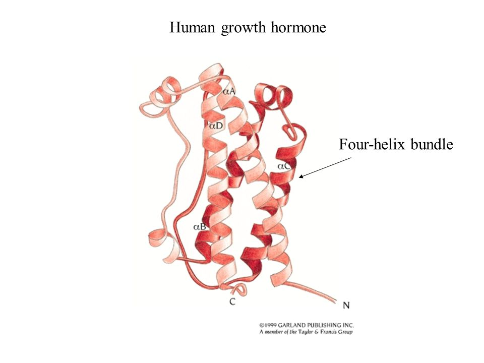 Human growth hormone Four-helix bundle