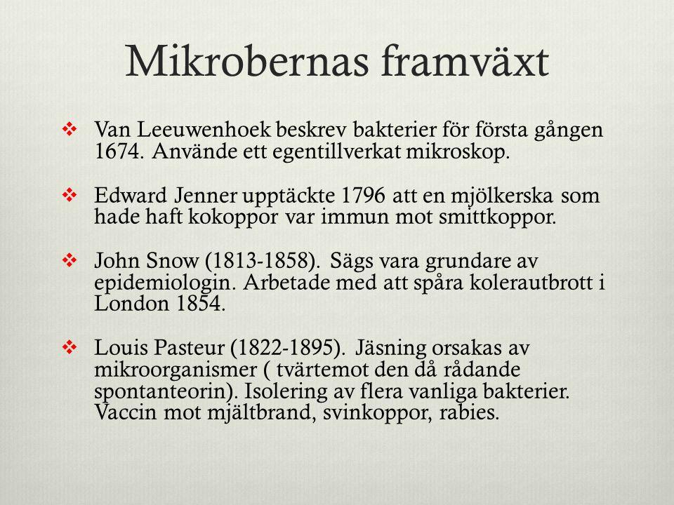 Mikrobernas framväxt Van Leeuwenhoek beskrev bakterier för första gången 1674. Använde ett egentillverkat mikroskop.