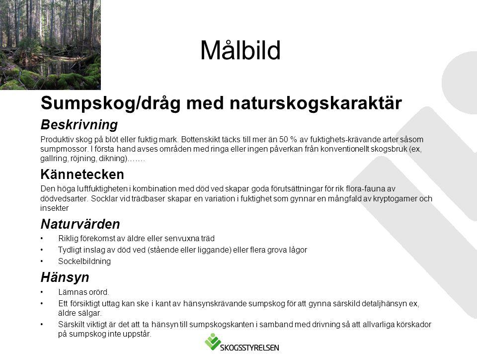 Målbild Sumpskog/dråg med naturskogskaraktär Beskrivning Kännetecken