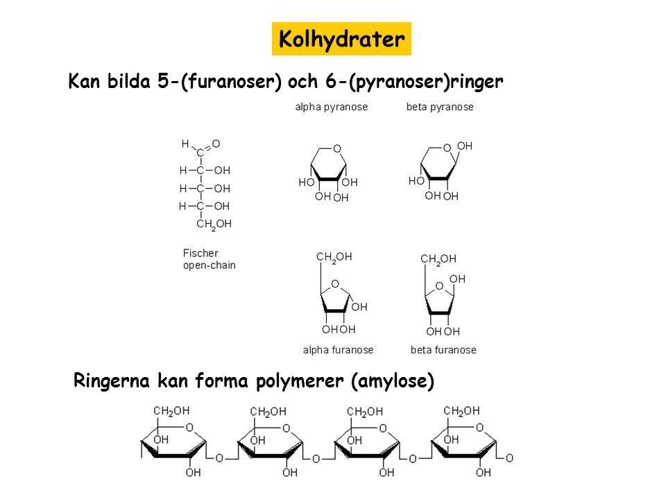 Kolhydrater Kan bilda 5-(furanoser) och 6-(pyranoser)ringer