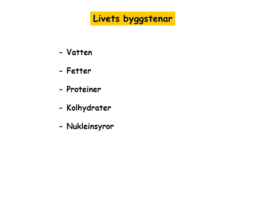 Livets byggstenar - Vatten - Fetter - Proteiner - Kolhydrater