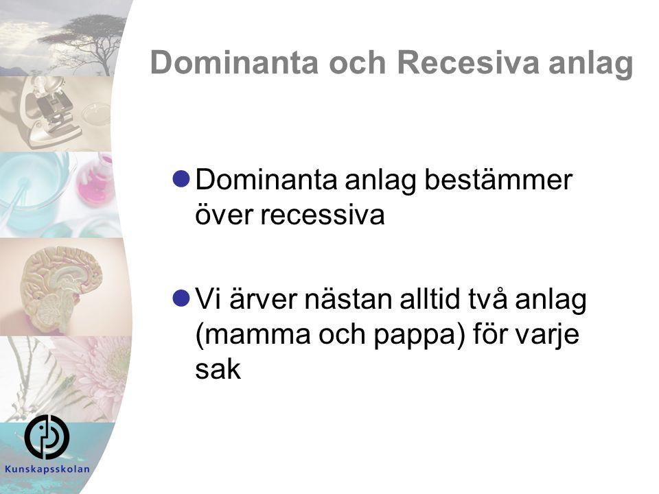 Dominanta och Recesiva anlag